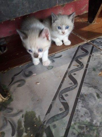 Doações de gatos  - Foto 3
