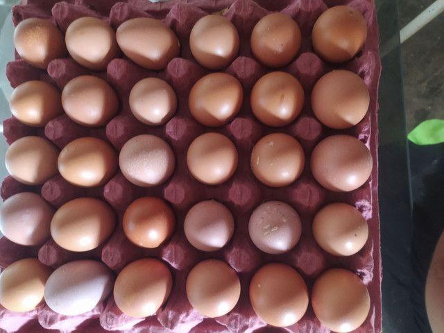 Ovos caipira - Foto 4