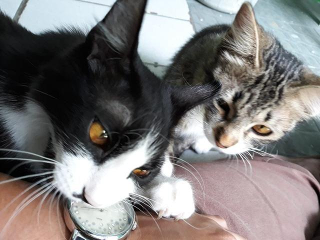 Lindas gatinhas para adoção conjunta - Foto 2