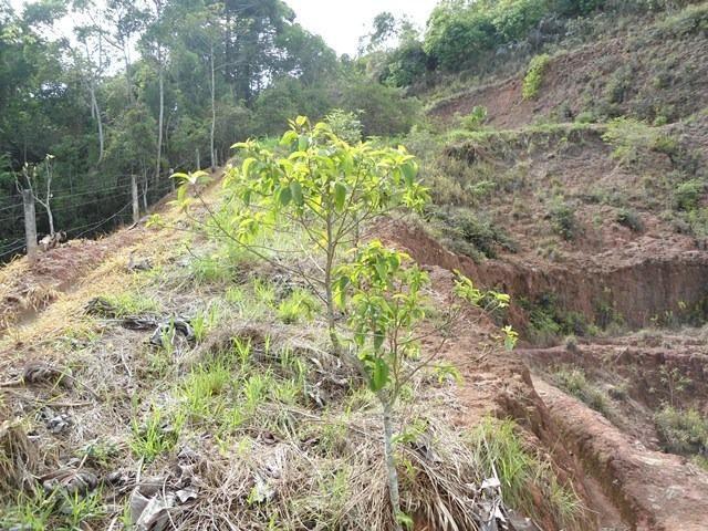 220 - Terreno na Prata - Teresópolis - R.J: - Foto 4