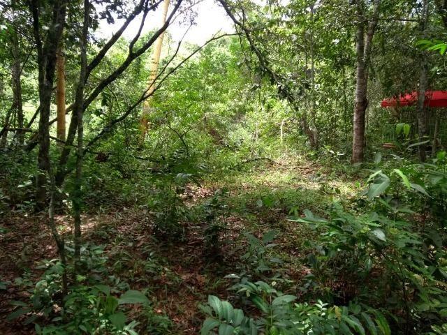 Chácara na beira do Rio Pirapitinga - Negócio de Oportunidade! - Foto 16