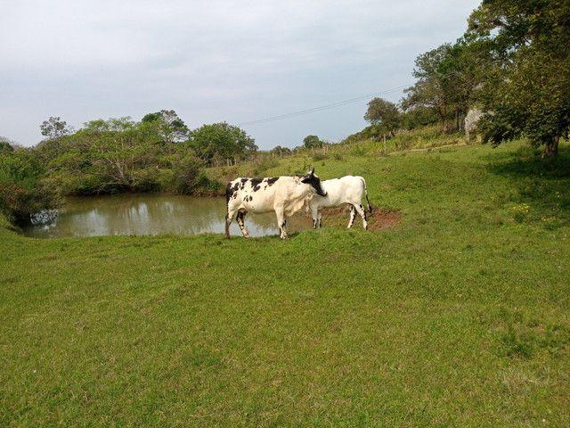 Vaca 2 cria cm uma linda novilha barbada - Foto 5