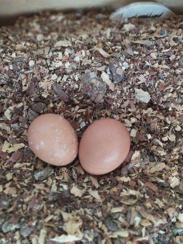 Ovos caipira - Foto 6