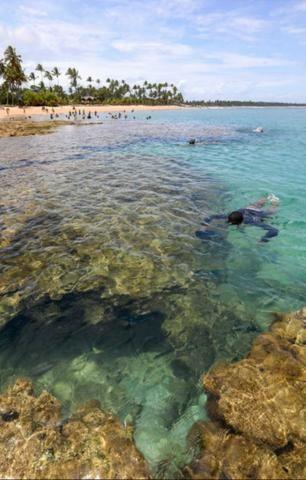 Lotes Taipu de Fora - Península de Maraú - Bahia - Foto 11