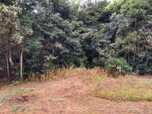 Chácara na beira do Rio Pirapitinga - Negócio de Oportunidade! - Foto 11