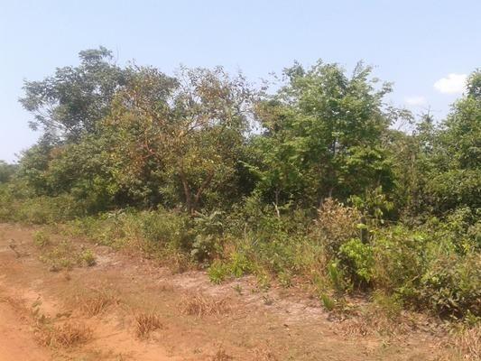 160 hectares,45 hectares eucaliptos, região de reserva do cabaçal- MT, Ocasião - Foto 7