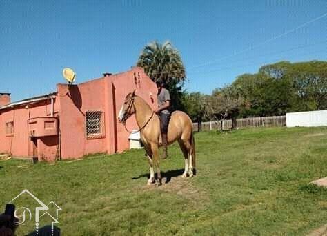 Sítio à venda com 2 dormitórios em Zona rural, Jaguarão cod:10164 - Foto 8
