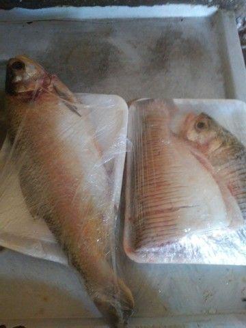 Peixe - Foto 3