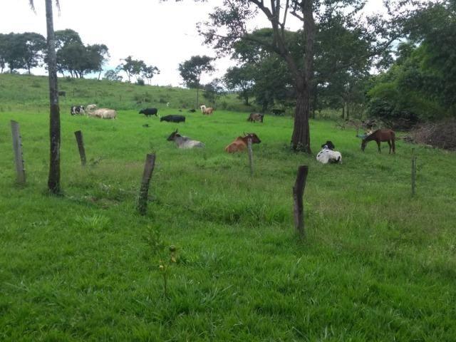 Fazenda 16,5 Alq - 50km de Goiânia - Hidrolândia - Entrada exclusiva - a 4 km da Rodovia - Foto 19