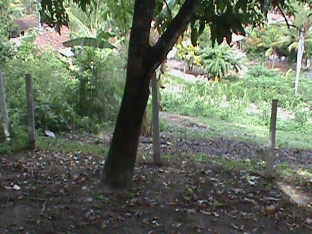 Sítio com 24x35 = 840m2, Vendo ou Troco , Em Tejucupapo, Goiana-PE - Foto 9