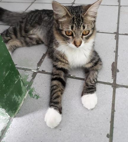Lindas gatinhas para adoção conjunta