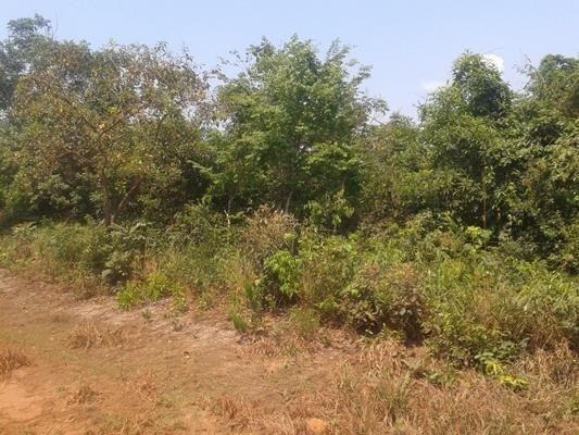 160 hectares,45 hectares eucaliptos, região de reserva do cabaçal- MT, Ocasião - Foto 8