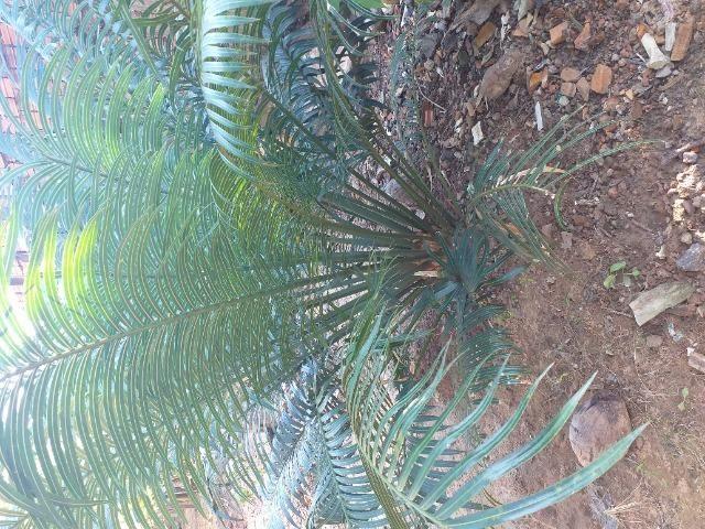 Planta - Foto 2