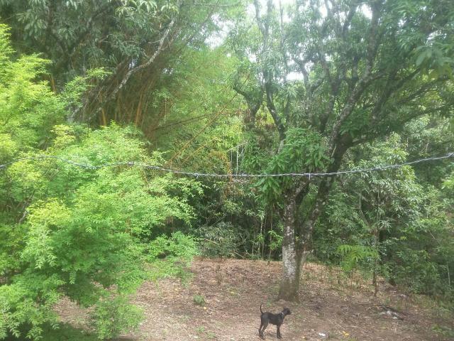 VENDO linda chácara em Brazlandia DF no Pulador - Foto 5