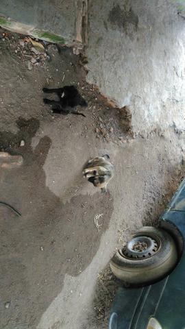 Doação de filhote de cachorro - Foto 2