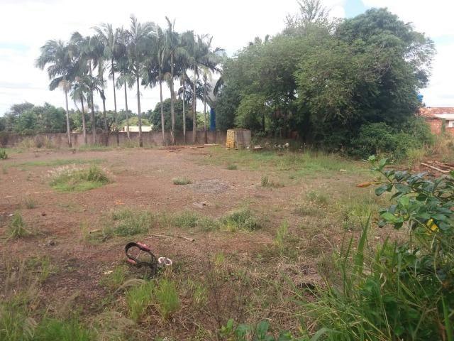 Locação - Chácara próximo à Av. Saul Elkind, 5000 m² com casa sede - Londrina/PR - Foto 8