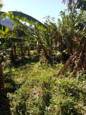 47 hectares 100% orgânica certificada OPAC
