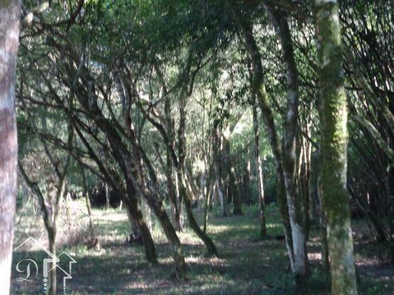 Chácara à venda em Zona rural, Santa maria cod:10004 - Foto 2