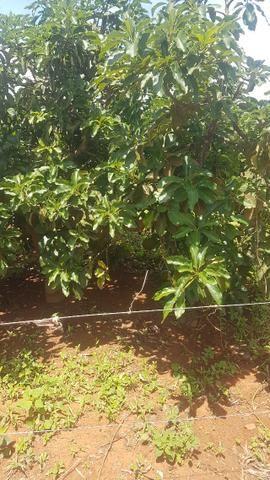 Vendo Chácara de porteira fechada em Planaltina GO , ou troco por Imóvel no DF - Foto 13