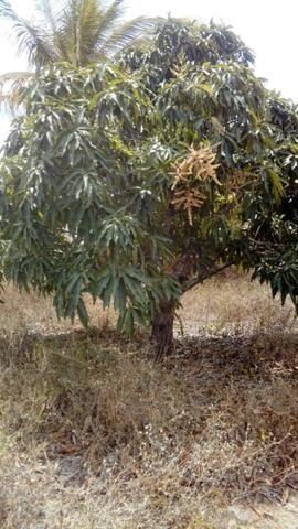 Chácara no Manduri - Foto 5