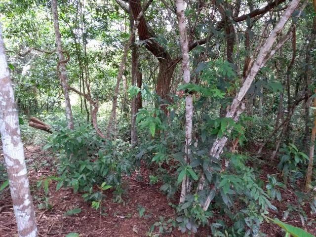 Chácara na beira do Rio Pirapitinga - Negócio de Oportunidade! - Foto 2