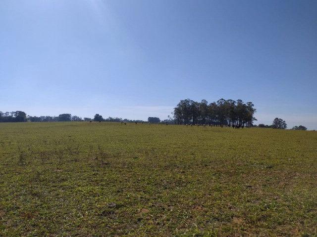 Velleda oferece linda fazenda 70 hectares 10 km da RS-040, aproveita 100% - Foto 2