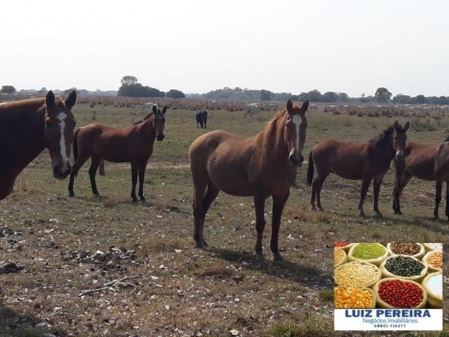 FAZENDA À VENDA EM PANTANAL NHECOLÂNDIA - MS - (Pecuária) - Foto 4