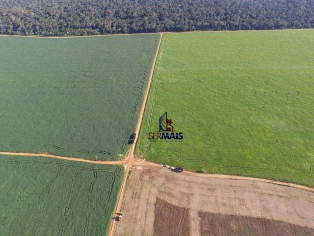 Fazenda muito bem localizada nas proximidade de Cujubim/RO - Foto 14