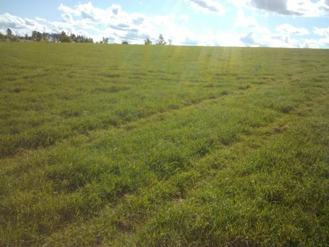 Fazenda 33 Alqueires, Região de Tatuí-Sp, Ideal P/ Haras - Foto 4