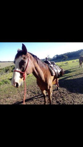 Cavalo s para vender logo - Foto 2