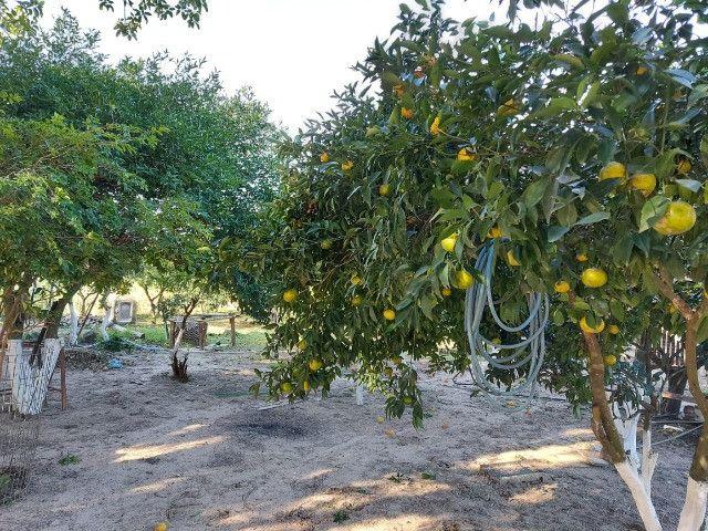 Velleda oferece espetacular sítio 2 hectares para lazer e moradia, ac troca - Foto 17