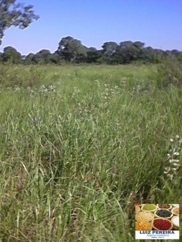 FAZENDA A VENDA EM CORUMBÁ - MS, DE 5.200 HECTARES (Pecuária) - Foto 7
