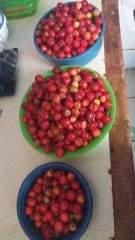 Acerola 15 o kilo