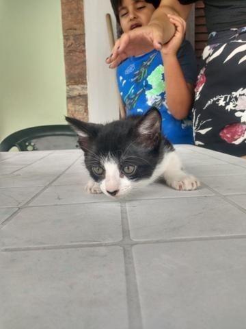 Gatinha e gatinho para doação - Foto 4