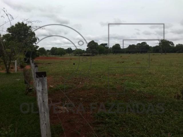 125 hectares Aquidauana MS - Foto 3