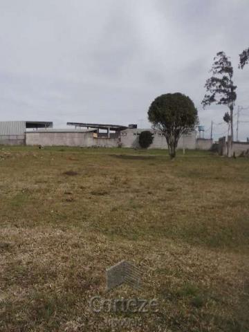 Terreno amplo no Costeira - Foto 9