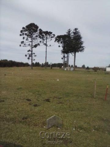 Terreno amplo no Costeira - Foto 3