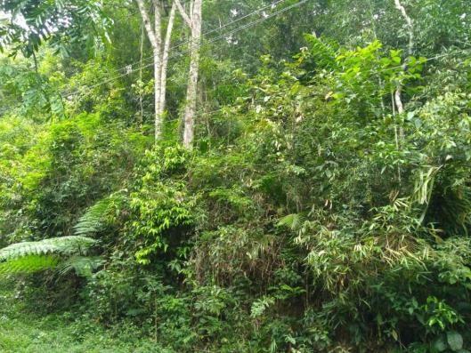 Terreno à venda, 3020 m² por r$ 56.000 - fazenda boa fé - teresópolis/rj - Foto 4