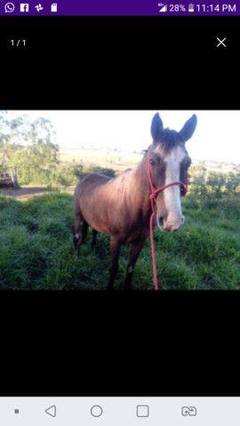Cavalo s para vender logo - Foto 5