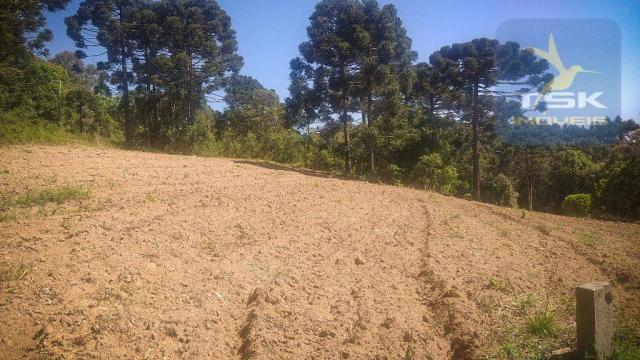 CH0407 - Chácara à venda, 2,5 Alqueires por R$ 195.000 - Zona Rural - Quitandinha/PR - Foto 6