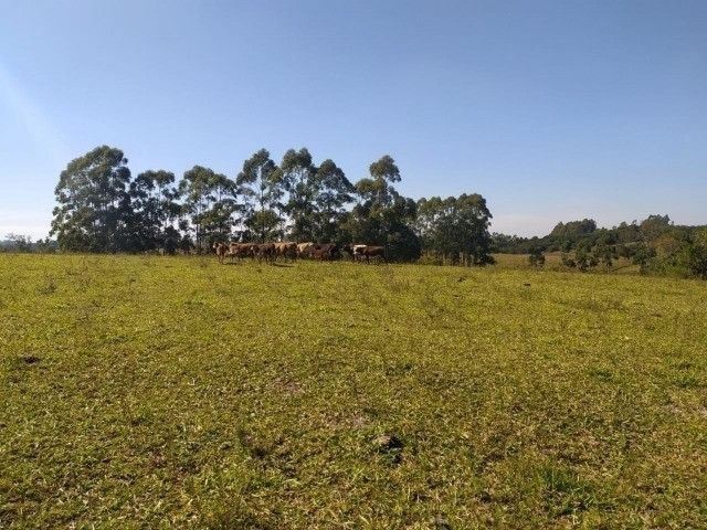 Velleda oferece linda fazenda 70 hectares 10 km da RS-040, aproveita 100% - Foto 7
