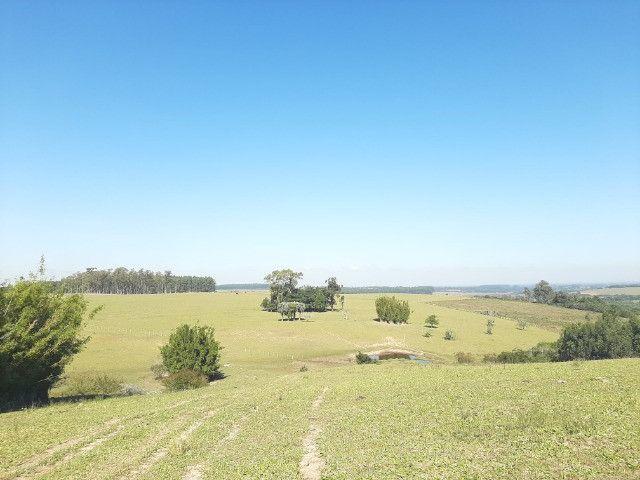 Velleda oferece linda fazenda 70 hectares 10 km da RS-040, aproveita 100% - Foto 8