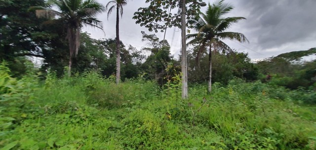 Chácara com 7 Hectares de Área em Aldeia - Foto 3
