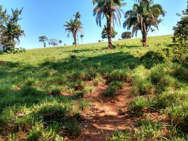 Fazenda, terra boa e pronta! - Foto 7