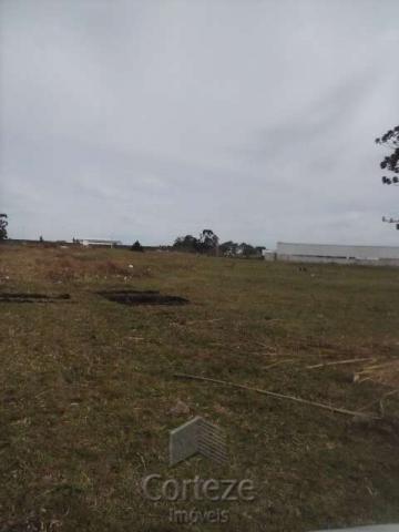 Terreno amplo no Costeira - Foto 7