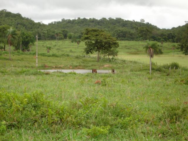 Fazenda em Poconé Cangas próximo á usina com 151 hectares - Foto 7
