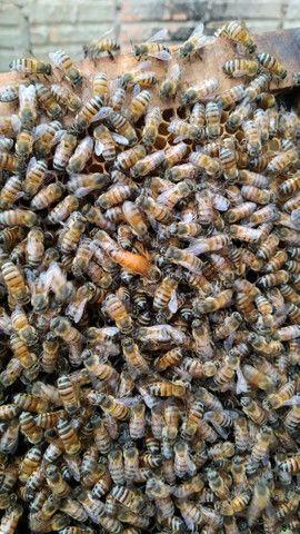 Procuro área para instalação de apiario em Piraí do Sul - Foto 4