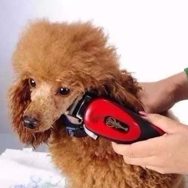 Kit Maquina De Tosa Pets Cães E Gatos Qirui 110v - Foto 3