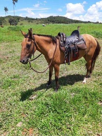 Vendo Égua top - Foto 3