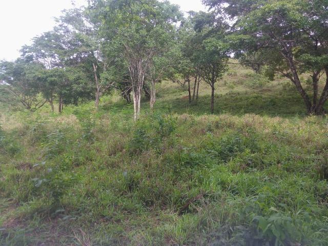 Vende-se uma chácara na região do PADF 18 HECTARES - Foto 3